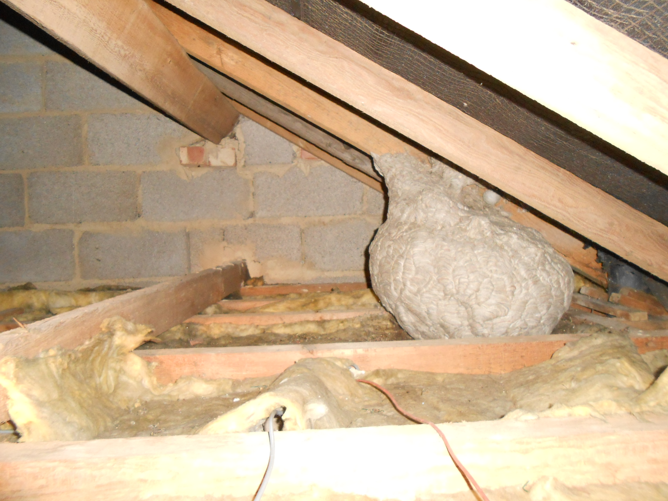 Look out for Wasps Nests!
